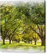 Live Oak Journey Paint Canvas Print