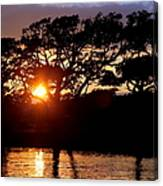 Live Oak Silhouette Canvas Print