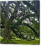 Live Oak Trees Canvas Print