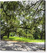 Live Oaks Dripping With Spanish Moss Canvas Print