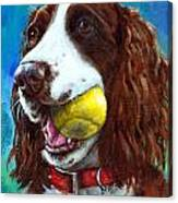Liver English Springer Spaniel With Tennis Ball Canvas Print