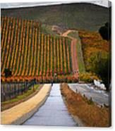 Livermore Vineyard 2 Canvas Print