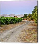Livermore Vineyard 3 Canvas Print