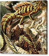 Lizard Detail II Canvas Print