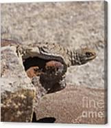 lizard from central Madagascar Canvas Print