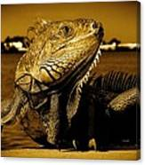 Lizard Sunbathing In Miami II Canvas Print