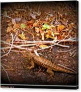 Lizard On The Loose Canvas Print