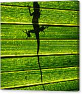 Lizard On The Other Side Canvas Print