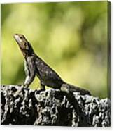 Lizard On The Wall Canvas Print