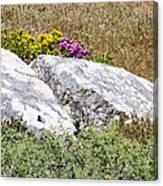 Lizard Protected Granite Boulders Canvas Print