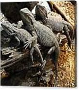 Lizards Canvas Print