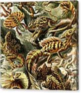 Lizards Lizards And More Lizards Canvas Print