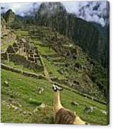Llama At Machu Picchu Canvas Print