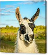 Llama Portrait Canvas Print