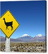 Llamas Crossing Sign Canvas Print