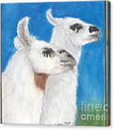 Llamas Tracks Farm Ranch Animal Art Camelid Canvas Print