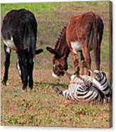 Lmao  Mules And Zebra - Featured In Wildlife Group Canvas Print