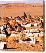 Loading A Salt Caravan Canvas Print