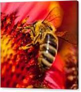 Loads Of Bee Pollen Canvas Print