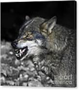 Lobo Canvas Print