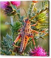 Locust And Thistle 2am-110423 Canvas Print