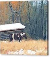 Log Cabin Pony Canvas Print