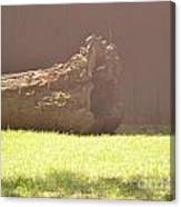 Log In Hazy Sunlight Canvas Print