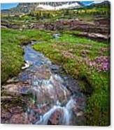 Logan Pass Creek Canvas Print