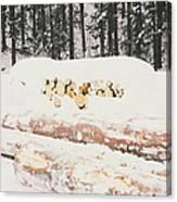Logs Canvas Print