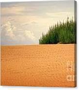 Lone Beach Bush Canvas Print