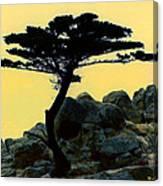 Lone Cypress Companion Canvas Print