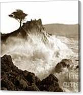 Lone Cypress Tree On  Midway Point Pebble Beach California Circa 1916 Canvas Print