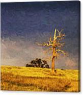Lone dead tree in paddock Canvas Print