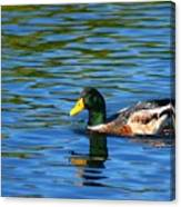 Lone Duck Canvas Print