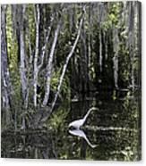 Lone Egret Canvas Print