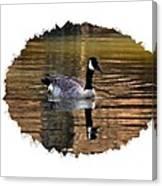 Lone Goose Canvas Print
