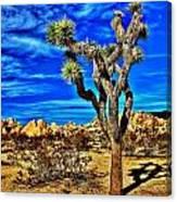 Lone Joshua Canvas Print