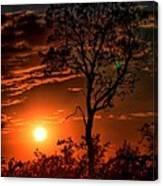 Lone Manzanita Sunset Canvas Print