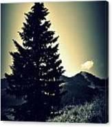 Lone Mountain Pine Canvas Print