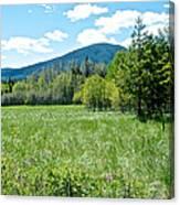 Lone Pine Prairie South Of Polebridge In Glacier Np- Mt  Canvas Print
