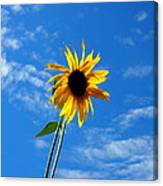 Lone Sunflower In A Summer Blue Sky Canvas Print