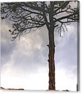 Lone Tree 11351 Canvas Print