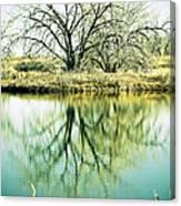 Lone Tree 2 Canvas Print