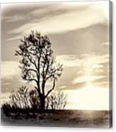 Lone Tree At Dusk Canvas Print