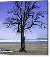 Lone Tree At Fort Gratiot Light House  Canvas Print