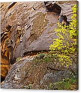 Zion Lone Tree Canvas Print