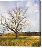 Lone Tree In Cades Cove Canvas Print