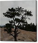 Lone Tree In Stone Mountain State Park North Carolina Canvas Print