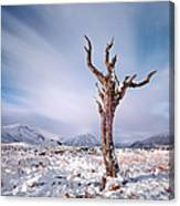 Lone Tree In The Snow Canvas Print