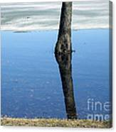 Lone Tree In Water Canvas Print